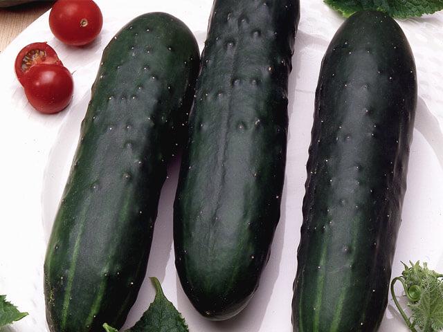 Cucumber - Marketmore-Organic
