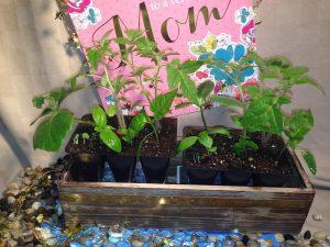 Go-Garden (May 8)