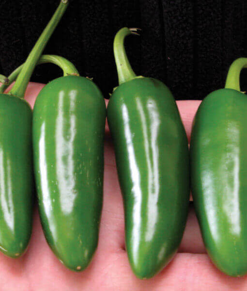 Pepper-Jalapeno M