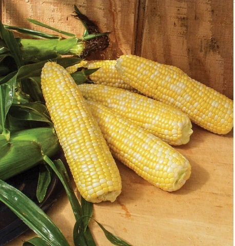 Awesome (Corn)