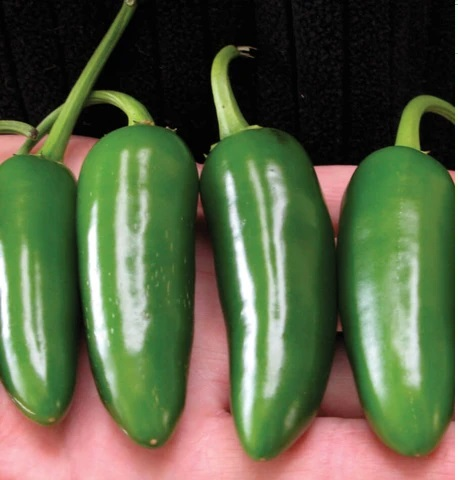 Jalapeno M (Peppers)