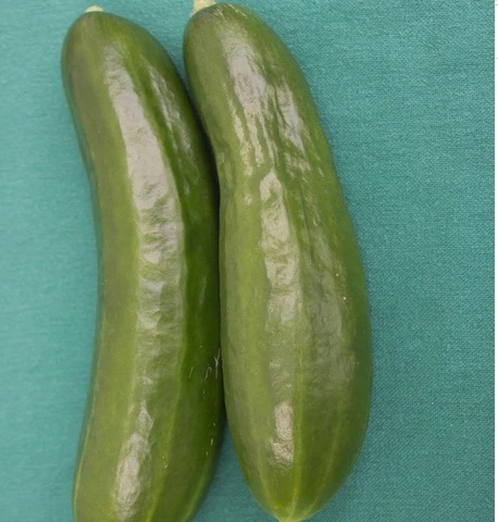 Mercury (Cucumber)